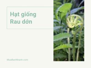 Mua bán hạt giống rau dớn rừng Tây Bắc, Ninh Bình, Quảng Nam - Chợ hạt giống online MuaBanNhanh