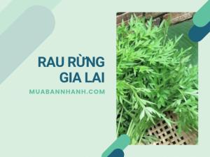 Mua rau rừng Gia Lai ở đâu? Rau rừng Gia Lai đặc sản có nguồn gốc từ vùng núi Trà My, Quảng Nam - rau Lủi
