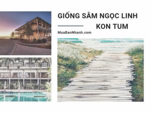 Bán cây giống sâm Ngọc Linh tại Kon Tum - Top nhà vườn ươm sâm giống huyện Đăk Tô tỉnh Kon Tum