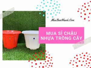 Mua sỉ chậu hoa nhựa composite trồng hoa hồng, hoa lan, hoa hướng dương mùa vụ hè