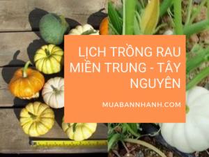 Lịch trồng rau miền Trung - Tây Nguyên - Nhà vườn rau sạch tại Đà Lạt trên MuaBanNhanh chia sẻ mùa vụ trồng