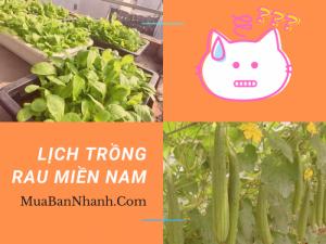 Lịch trồng rau miền Nam - thời vụ gieo trồng rau sạch 12 tháng trong năm, dễ chăm sóc tư vấn từ MuaBanNhanh
