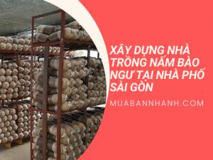 Xây dựng nhà trồng nấm bào ngư trong nhà phố Sài Gòn