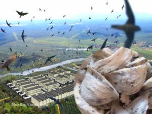 Khai thác tiềm năng nuôi yến ở Tây Nguyên - Giải pháp phát triển bền vững nghề nuôi chim Yến vùng cao nguyên