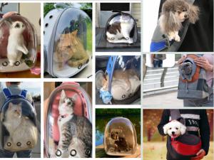 Nguồn hàng túi vận chuyển chó mèo, balo phi hành gia - lấy sỉ cho Pet shop làm thương hiệu