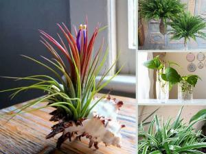 Cây trồng trong nhà dễ sống cho không gian phòng khách, phòng ngủ, phòng tắm, nhà bếp, nhà vệ sinh