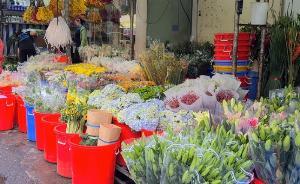 Tư vấn nguồn hàng kinh doanh hoa tươi Đà Lạt, hoa tươi nhập khẩu giá tốt
