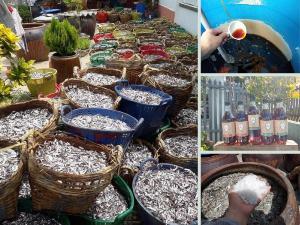 Nhà cung cấp nước mắm Phan Rang giá sỉ TPHCM - Nước mắm nguyên chất cá cơm Phan Rang Lâm Ngọc