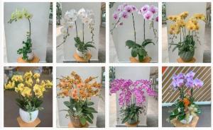 Nhà cung cấp Lan Hồ Điệp TPHCM - Dịch vụ điện hoa Lan Hồ Điệp Tết, Hồ Điệp sinh nhật, hoa lan sinh nhật